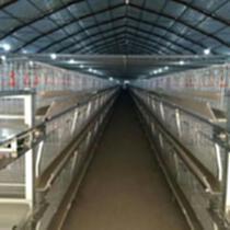 肉雞養殖設備籠養設備層疊式籠養設備山東金石農牧機械